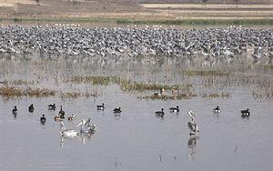 Cranes Ethiopia