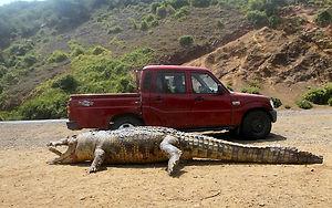 Crocodile Ethiopia