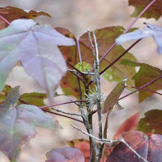 air fern in leaves.jpg