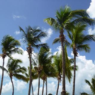 10 Palms.jpg