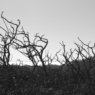 BW Tree limbs.jpg