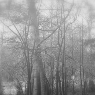 swamp water.jpg