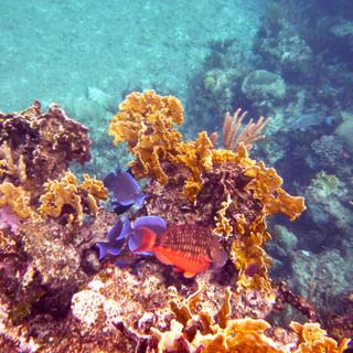 Gold Coral Fish.jpg