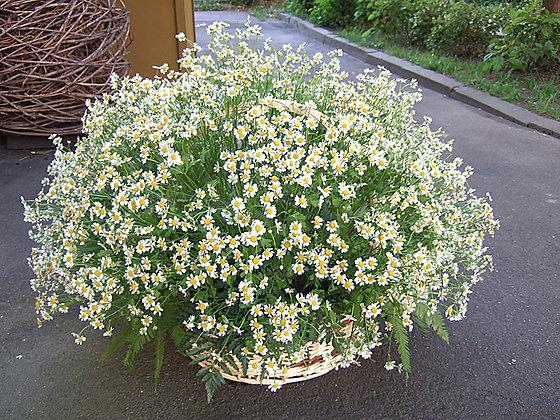 Корзины цветов 34