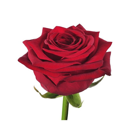 """Роза """"Ред Наоми"""""""