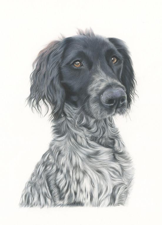 Pet Portrait - Freya