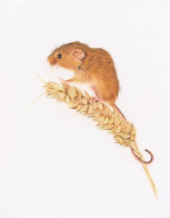 Mouse Portrait