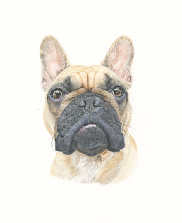 Pet Portrait - Greta