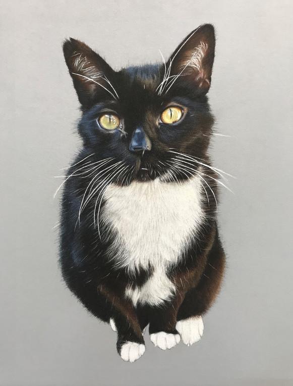 Pet Portrait - Jaz