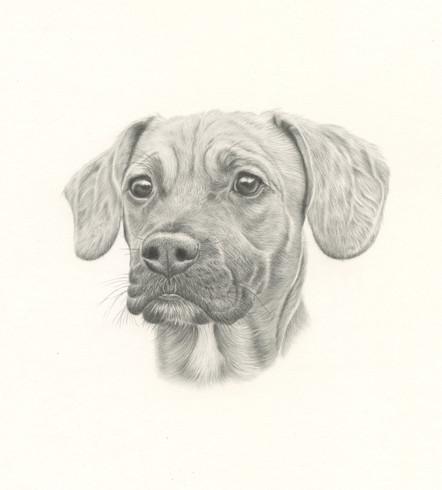 Puppy Portrait (Graphite)