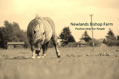Newlands Bishop.jpg