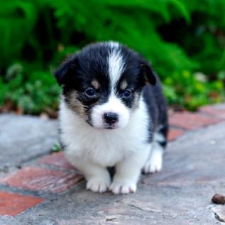 Puppy 402.jpg