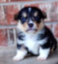 Puppy 326.jpg