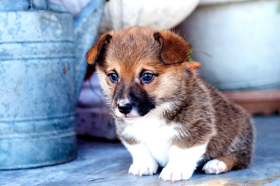 Puppy303.jpg