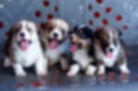 Puppy 412.jpg