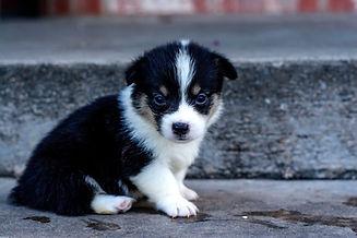 Puppy 410.jpg