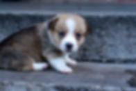Puppy 404.jpg