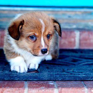 Puppy209.jpg