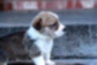 Puppy 407.jpg