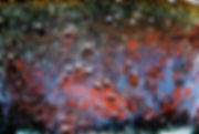 ultrnær blårød.jpg