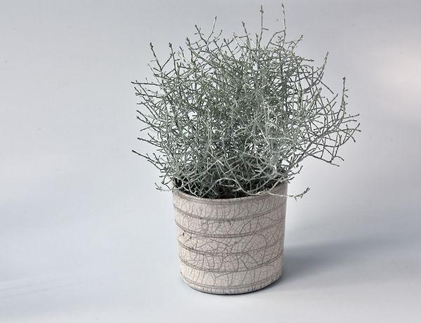 Karin Sauer plantekrukke