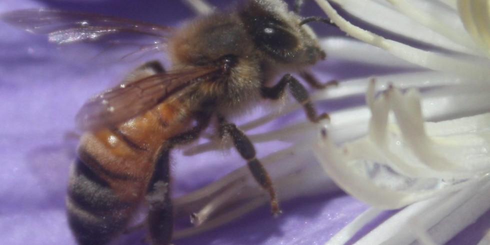 New Beekeeper Forum