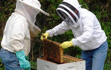new-beekeeper.jpg