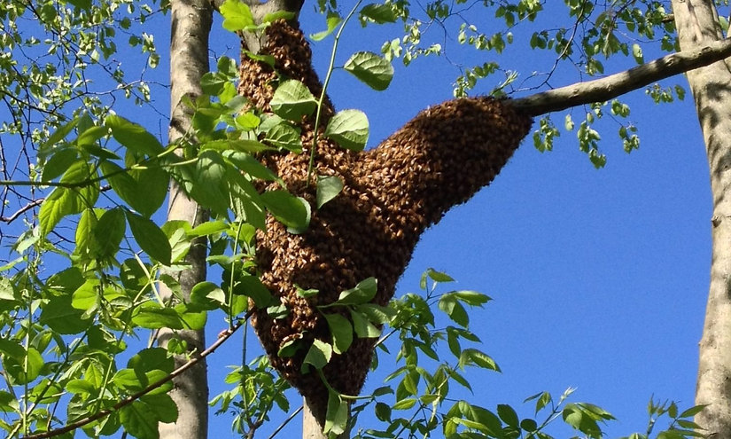 cropped-Swarm-blue-sky_edited.jpg
