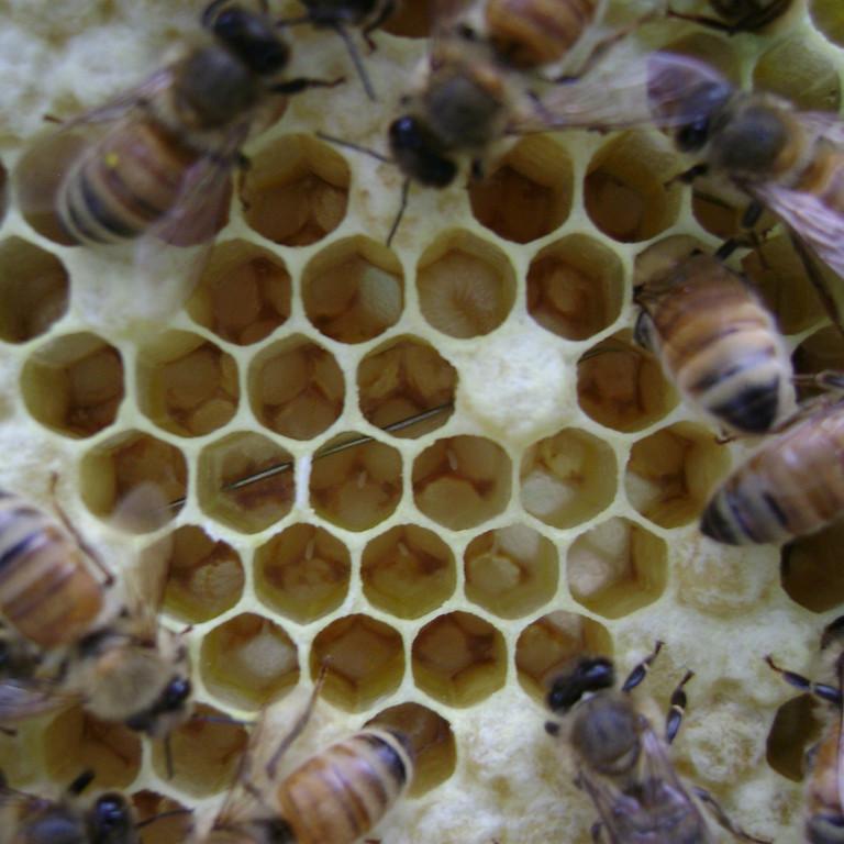 New Beekeeper Forum (1)