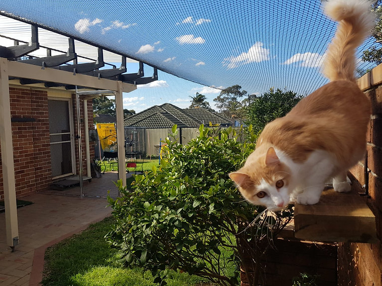 Cat netting backyard.jpg