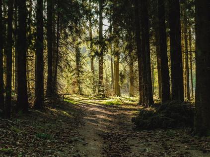 Naturverbundenheit Teil 1 |Gastbeitrag Ananda World
