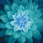 Teal Large Flower 43in x 43in Digitally Printed