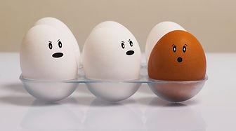 chicken-eggs-color-concept-1556707.jpg