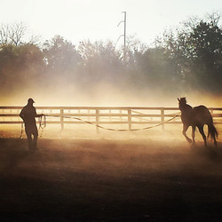 Morning at brownland autumn clasdic