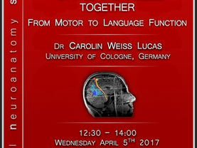 Putting the puzzle together: From motor to language function