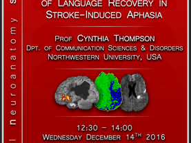 Neurobiology of language recovery in stroke-induced aphasia