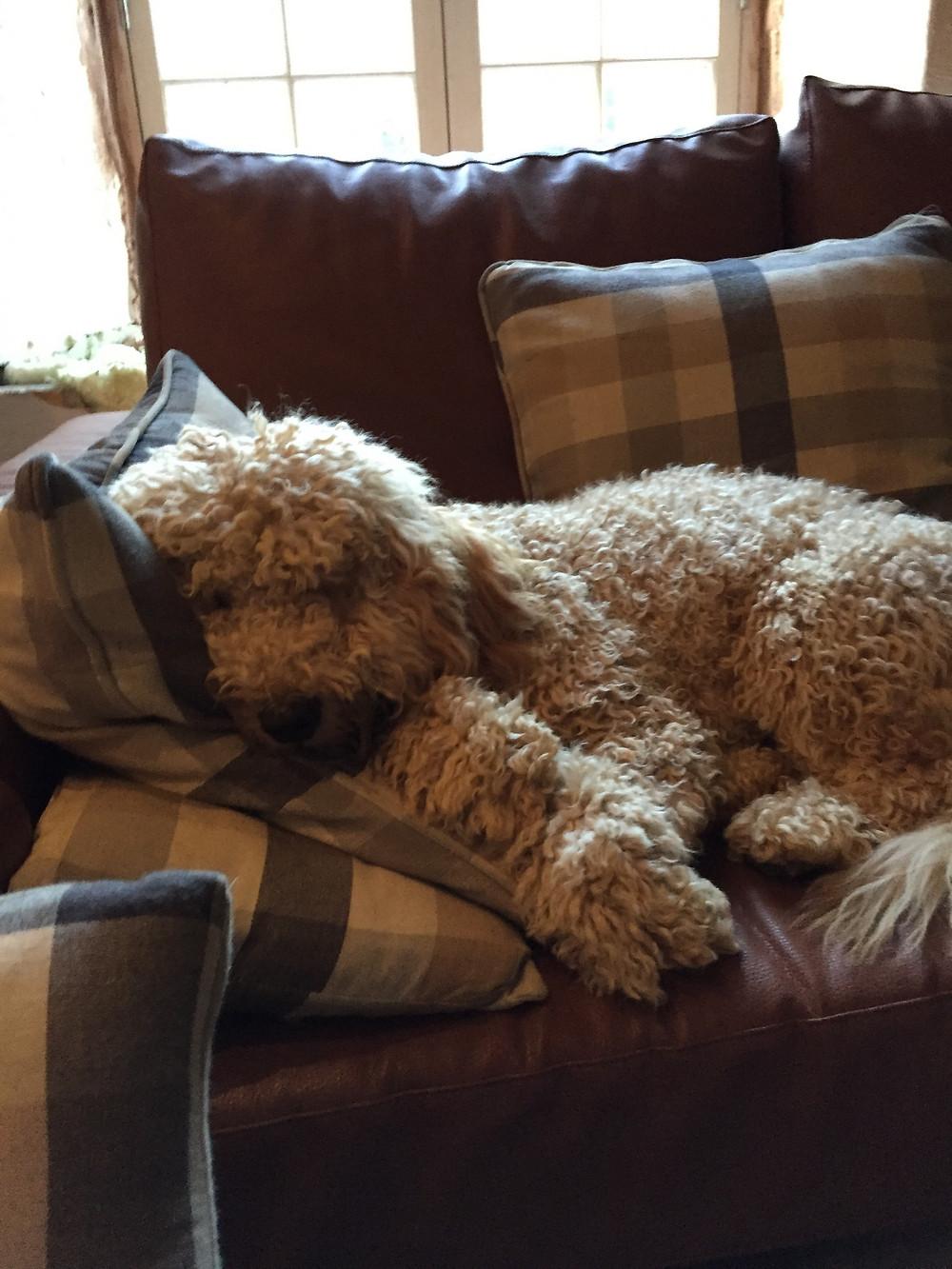 Get Off My Sofa