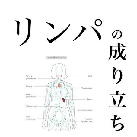 【リンパの成り立ち】健康雑学