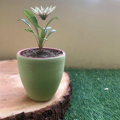 "Terracotta Green Planter - 4.5"""