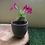 "Thumbnail: Terracota Grey Cray Planter - 4.5"""