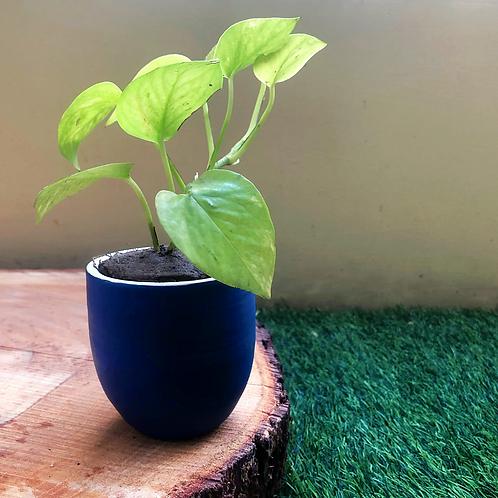 """Terracota Blue You Planter - 3"""""""
