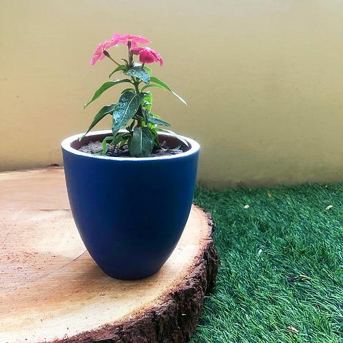 """Terracota Blue You Planter - 4.5"""""""