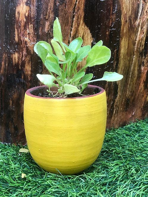 "Terracotta Yellow Jazz Planter-3"""