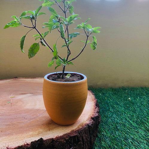 """Terracotta Peach Pap Planter -3"""""""