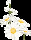 daisies.png