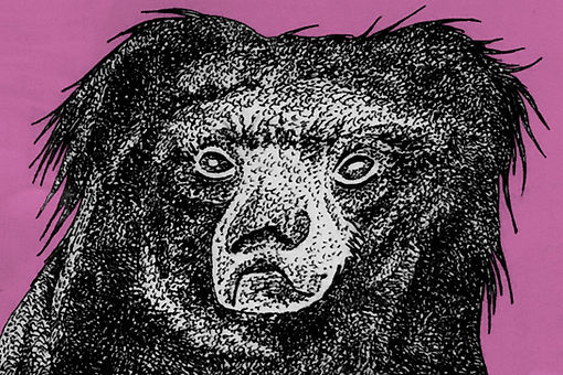 pen drawing of bear for birthday card
