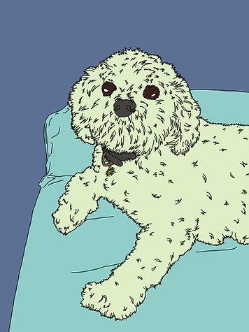 Digital drawing of poodle
