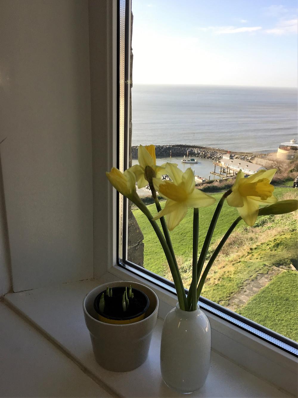 Daffodils overlooking Ventnor Harbour