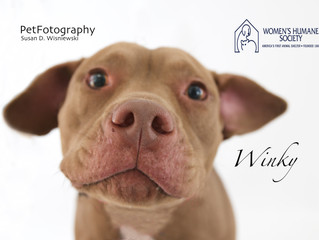 PetFotography Supports Local Animal Shelter