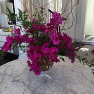 #phalenopsisorchids